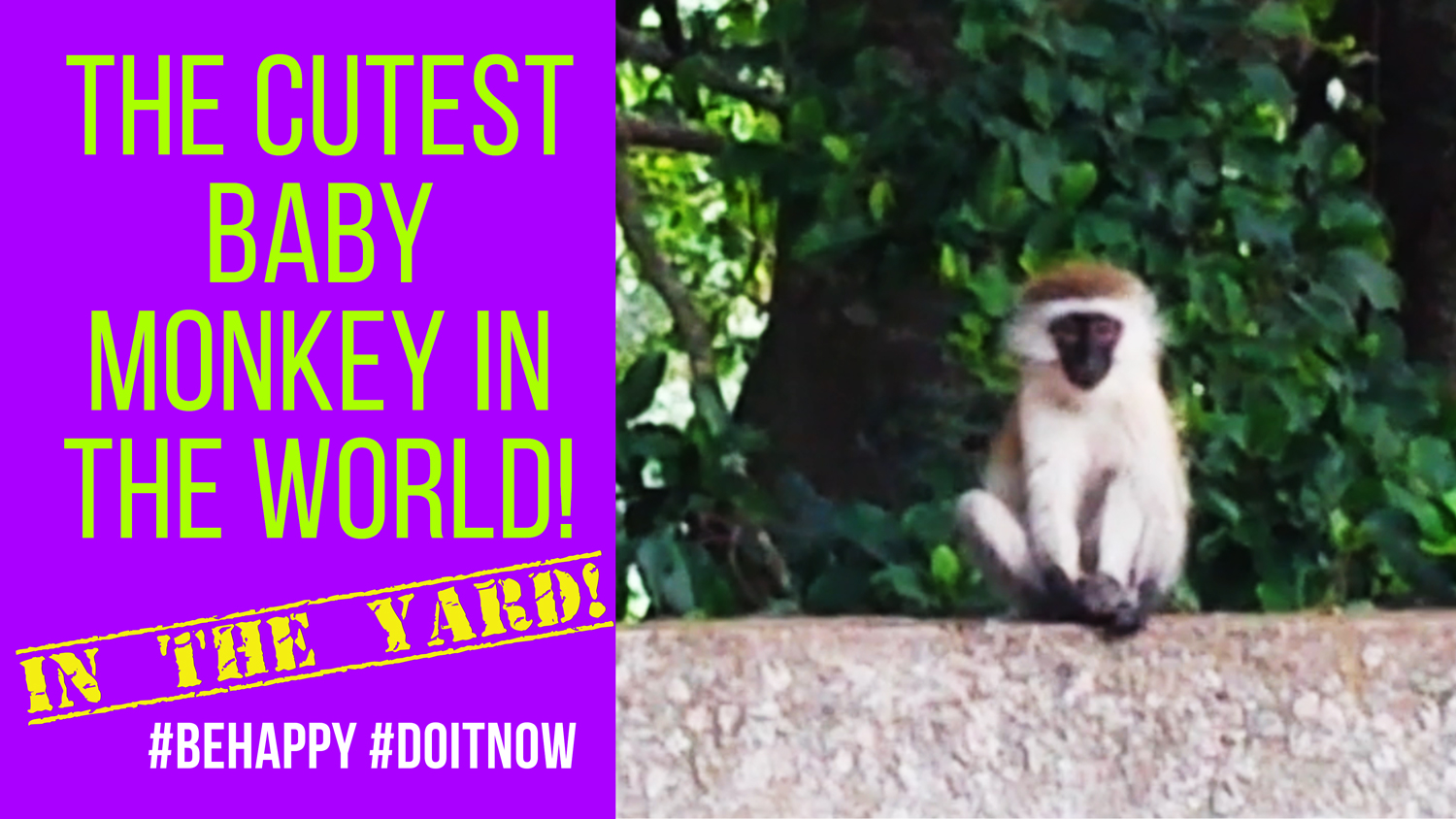 Monkeys in our BACKYARD! #Nairobi #Vlog